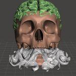 skull brain 2